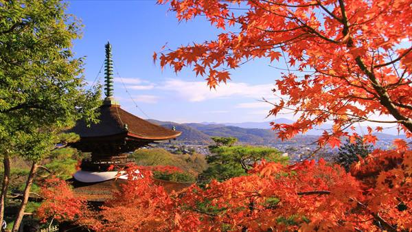 arashiyamakouyou07